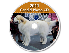 2011-CD-Great-Pyrenees-Club-of-Americas-National-Specialty-Photos-by-GoldFish-Communications-Debra-Fisher-Goldstein-MN