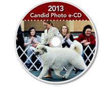 2013-CD-Great-Pyrenees-Club-of-Americas-National-Specialty-Photos-by-GoldFish-Communications-Debra-Fisher-Goldstein-MN