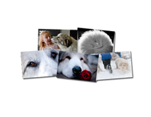 Art-Photo-Notecards-Front-Great-Pyrenees-Club-of-Americas-National-Specialty-Photos-by-GoldFish-Communications-Debra-Fisher-Goldstein-MN