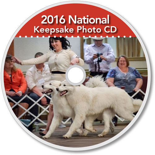 The-Matamoras-National-Specialty-Great-Pyr-Sized-Photo-CD