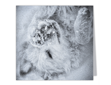 The-Snow-Angel-Art-Photo-Square-Note-Cards-on-linen-paper