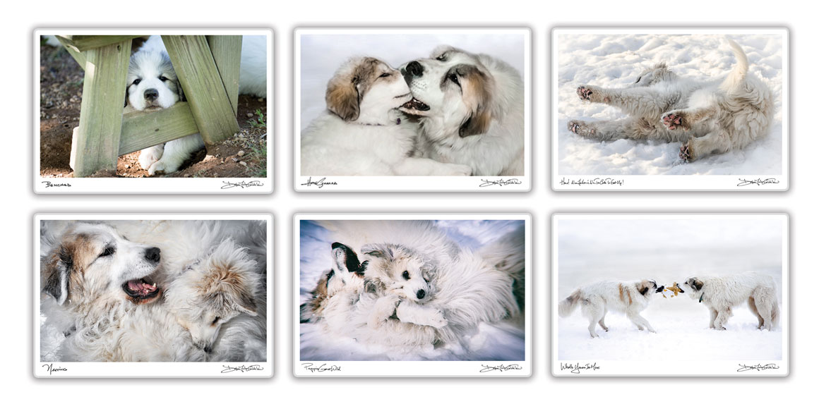 goldfih-communications-great-pyrenees-photo-placemats-assortment