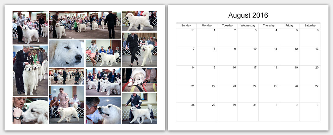 p2-The-Matamoras-National-Specialty-Great-Pyr-Sized-Photo-Calendar